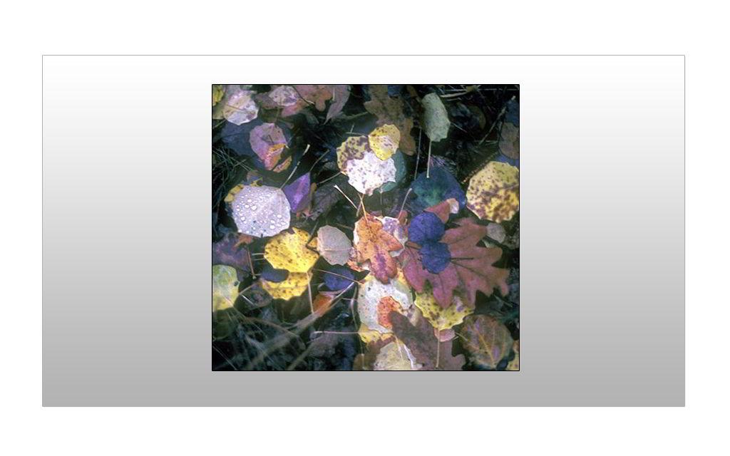 Los pasos de los duendes sobre las hojas caídas del otoño