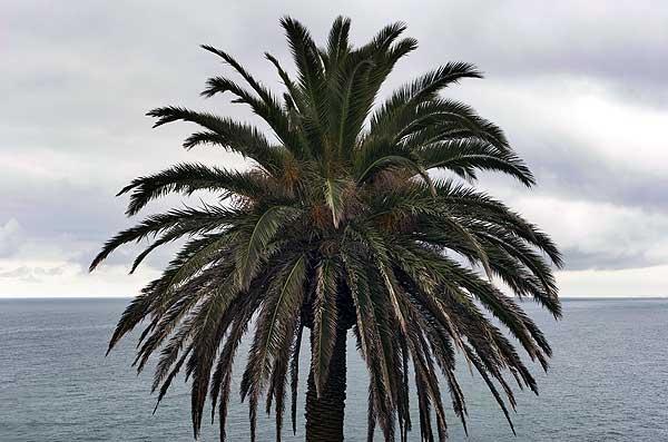 En Alicante huele a mar