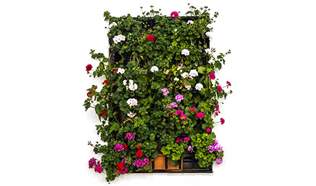 Mónica María Volpini Camerlinckx Encontré un balcón con flores