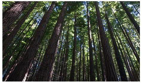 Los lenguajes protectores de nuestros bosques