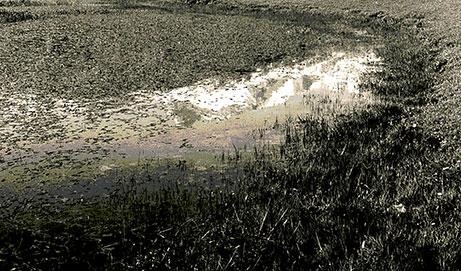 Terror en el Lago Vidna