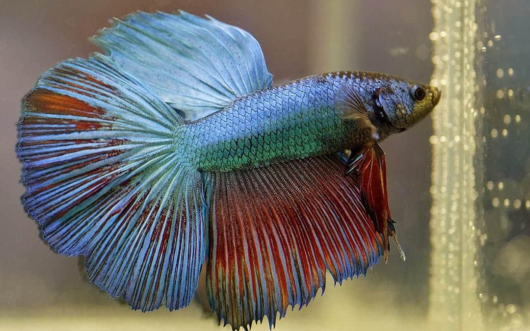 Anselmo, el pez