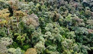 Bosques artículo Víctor Corcoba