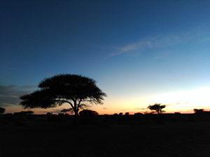 poema desierto de la noche
