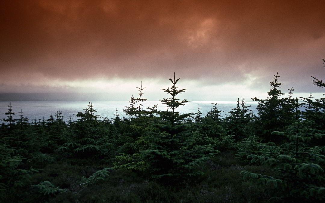 Bosques nómadas