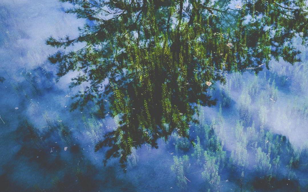 El árbol sin bosque