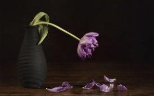 Poemas Celebraciones y despedida