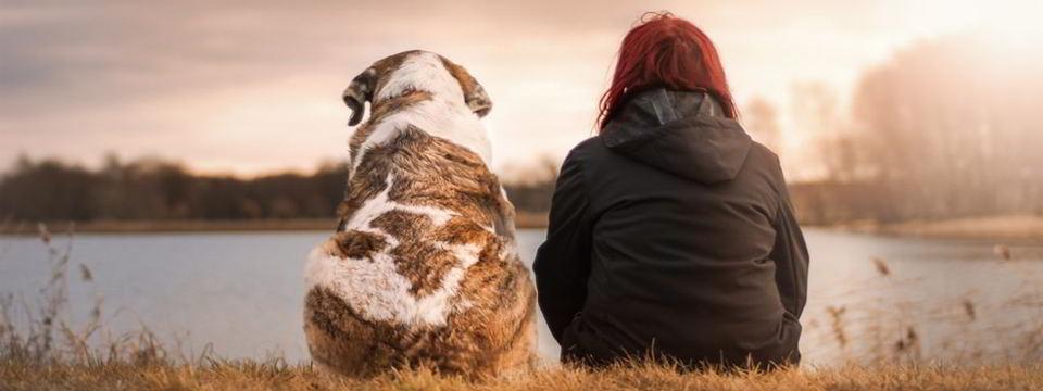 La importancia de los perros en la sociedad