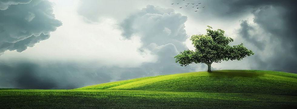 Daniela es a lo lejos un árbol